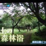 森林公園くつきの森の風景